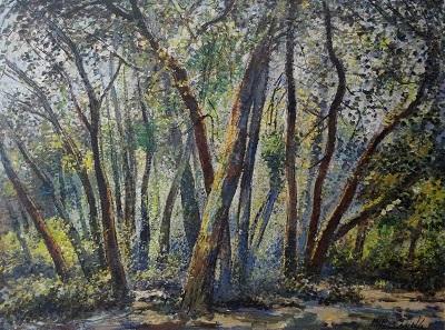 FORESTE NELLE MONTAGNE DI SANTA CRUZ Image